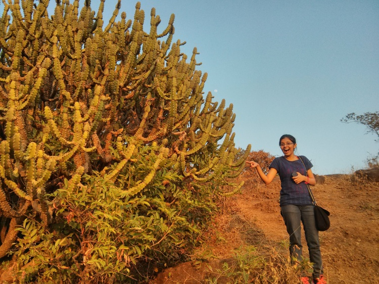 Oh, my! What a giant cactus this one is!