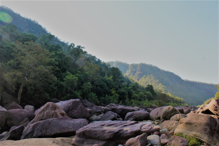 The enchanting wilderness of Satpura
